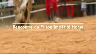 Derval : Le Haras de Coismur présente sa nouvelle race > Le frison Impéial