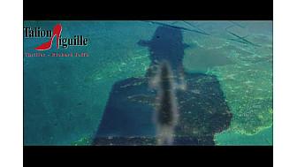 Talion Aiguille Animation
