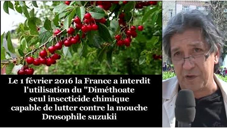 INTERDICTION du diméthoate : les importations de cerises traitées au diméthoate devraient être interdite ... #dimethoate @#TvLocale_fr  #DrosophileSuzukii