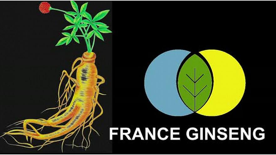 Toulouse : France Ginseng #ginseng #santé #agriculture #médecinedouce #tvlocale.fr
