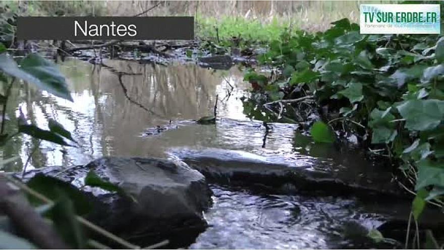 Nettoyage des rivières avec Les Amis de l'Erdre