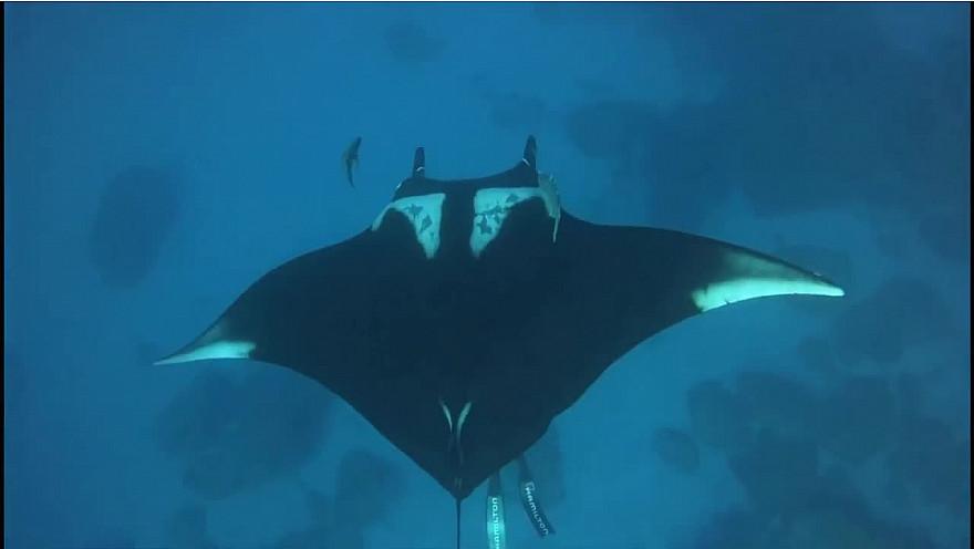 Approche TV : 'Le Cœur de l'Océan' avec Pierre FROLLA à Punta-Tosca au Mexique @PierreFROLLA