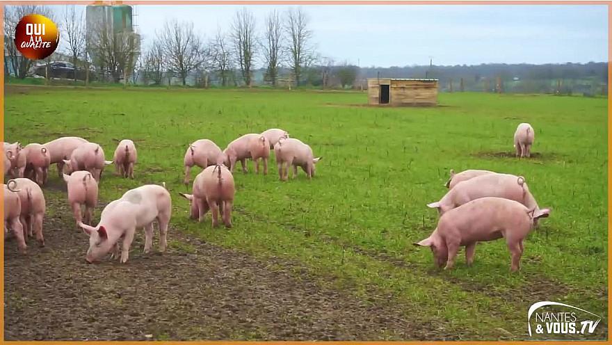 Le Porc Fermier de Vendée élevé en plein air - Épisode 1 @Agridemain @VendeeQualite #Porc
