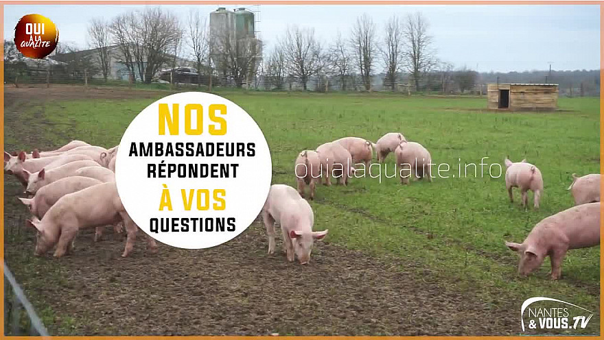 Approche Rurale TV : Le Porc Fermier de Vendée élevé en plein air - Épisode 2 @Agridemain @VendeeQualite #Porc