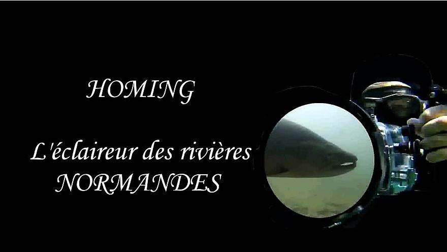 En Approche...  : HOMING l'Éclaireur de nos rivières de NORMANDIE #TruiteDeMer