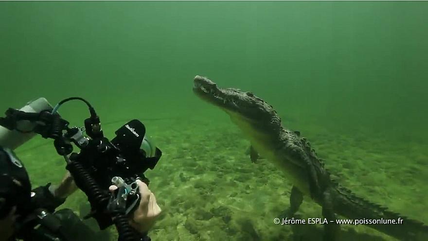 L'Approche-TV : Aimeriez-vous nager avec des crocodiles d'eau salée à Cuba!